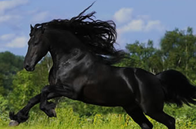 Horse Running in a field
