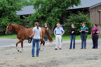 Dr. Myhre and Interns evaluating a horse